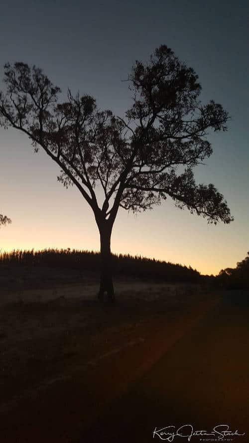 Taken on the road between Waroona and Forrest Hwy